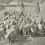 Il pastorello del Navajo
